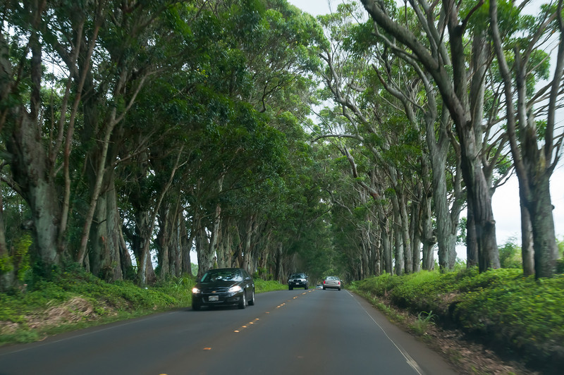 "Back in the day a large plantation owner on Kauai bought a whole ton of trees for his plantation. Turns out he bought way too many so he donated the rest to Kauai. They planted them along the end of the road from Poipu to Lihue and now the trees form a ""Tunnel of Trees"" along the road. The branches used to be intertwined but the hurricane in the 90's destroyed a lot of the branches/leaves. There wasn't really anywhere to pull over in the tunnel of trees so I had to take this shot while sitting in the front of a moving car."