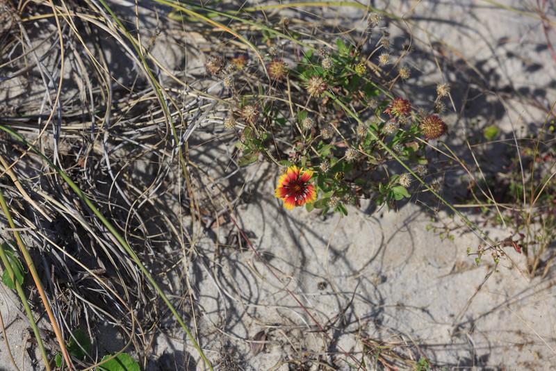 2014_10_24 Bald Head Island 034.jpg