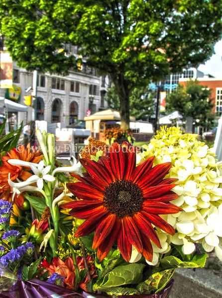 Easton Farmers Market, Easton, PA  9/1/2012