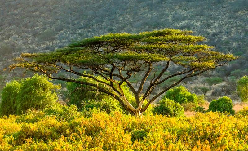 Trees-7.jpg