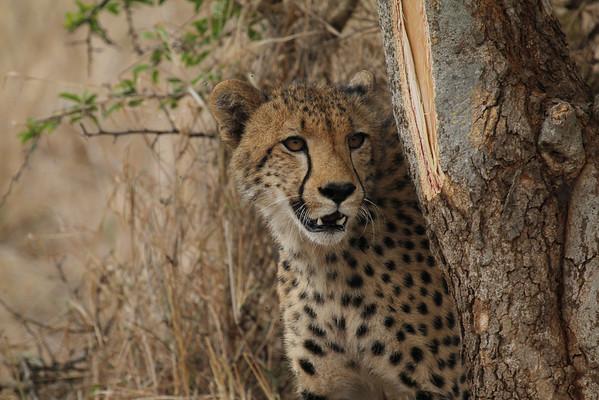 South Africa Kruger National Park Animals