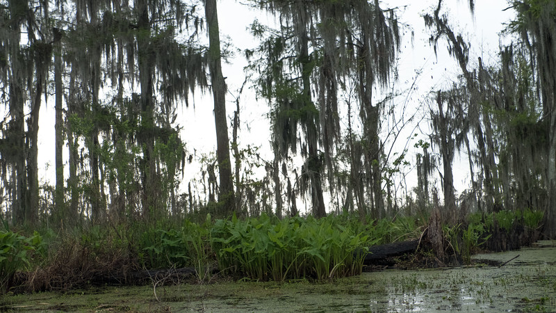 ManchacSwamp-6921.jpg