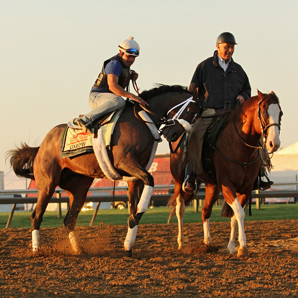 Oxbow (Awesome Again) trains for the Preakness Stakes (Gr I) at Pimlico 5/17/13. Trainer: D Wayne Lukas. Owner: Calumet Farm
