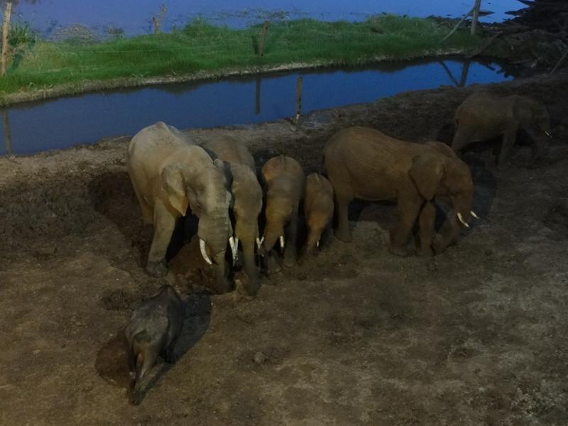 East Africa Safari 80.jpg