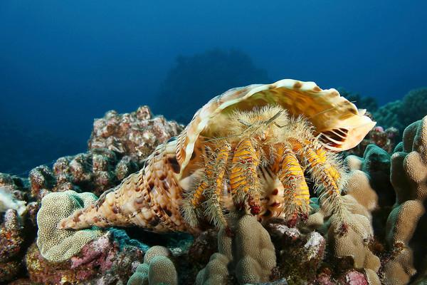 Crustaceans and Molluscs