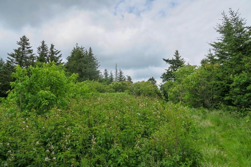 Green Mountain Trail -- 5,860'