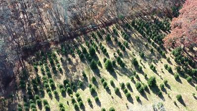 Bedrock Tree Farm