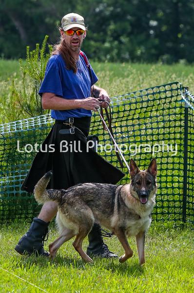 German Shepherd DH2