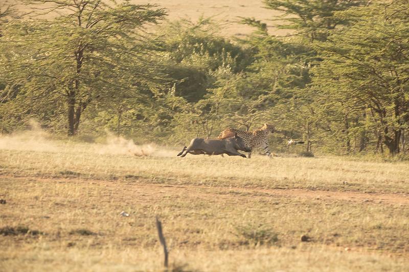 warthog-chase.jpg