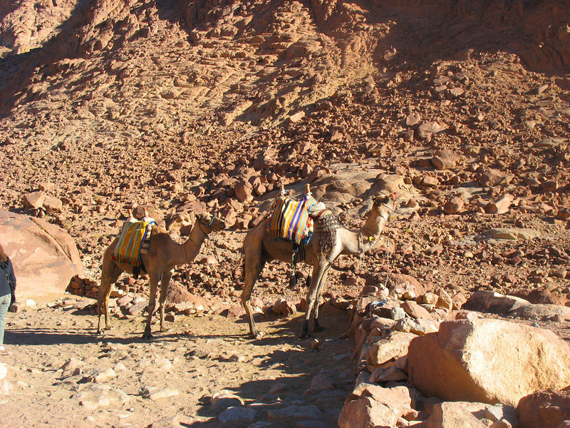 Egypt-752.jpg