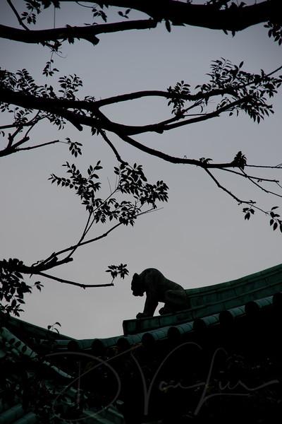 JapanPhotoTour20190204-20.jpg