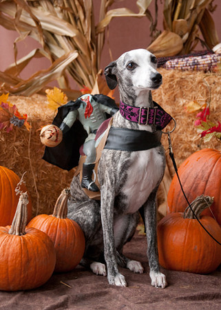 Global Pet Foods Howl-O-Ween Events