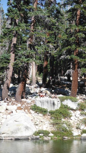 sequoia 094.JPG