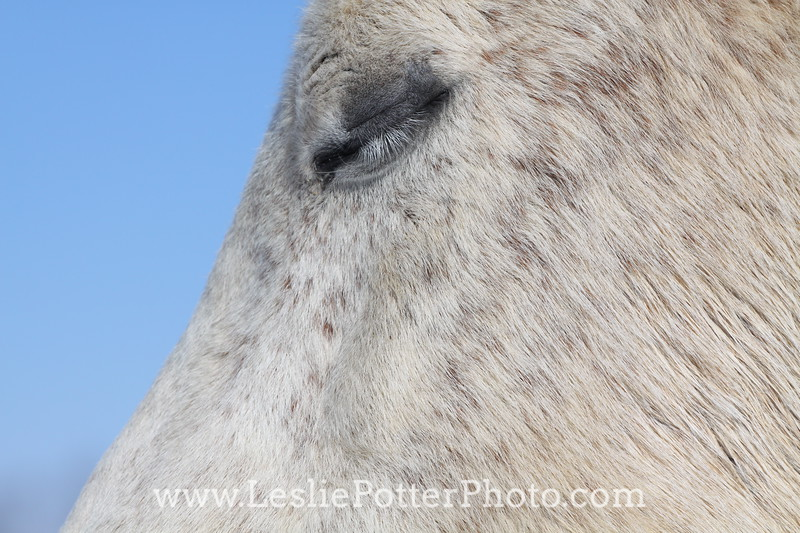Closeup of Closed Horse Eye