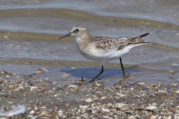 2016-09-03 Riverlands Migratory Bird Sanctuary