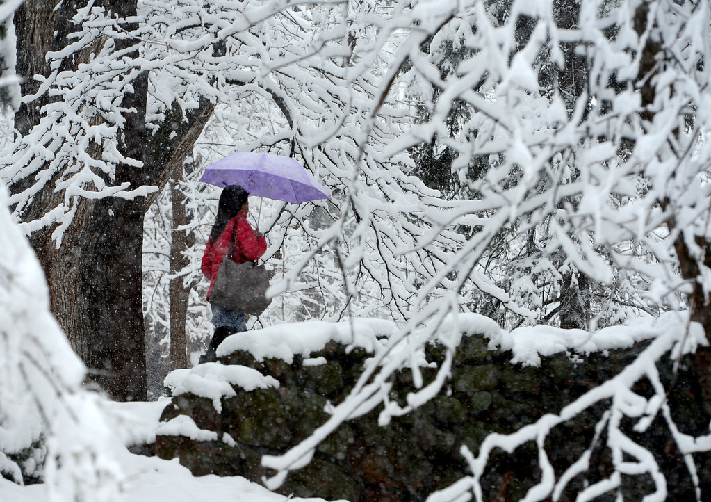 . A woman walks near Varsity Pond on the University of Colorado campus during the snow storm on Wednesday, May 1, 2013. Cliff Grassmick  / Boulder Daily Camera
