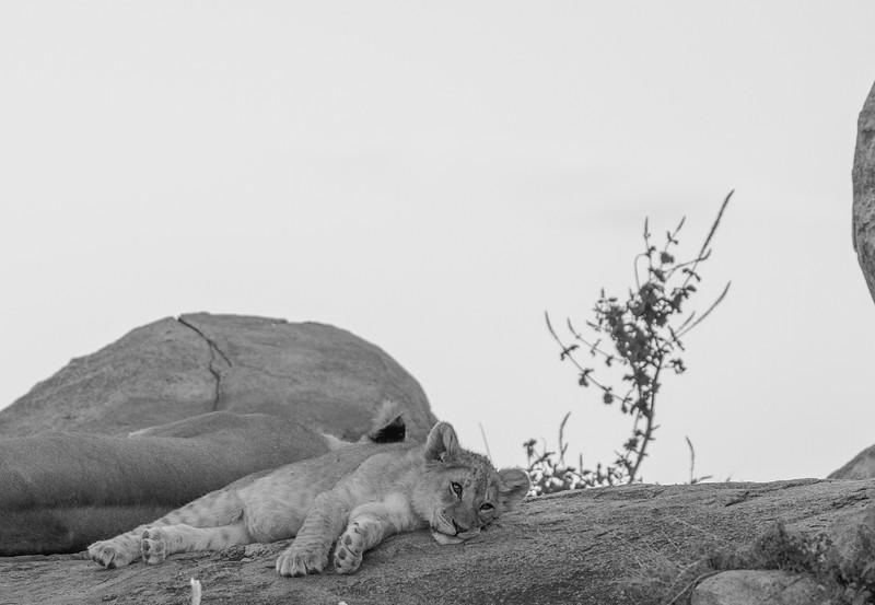 Tanzania_Feb_2018-622.jpg