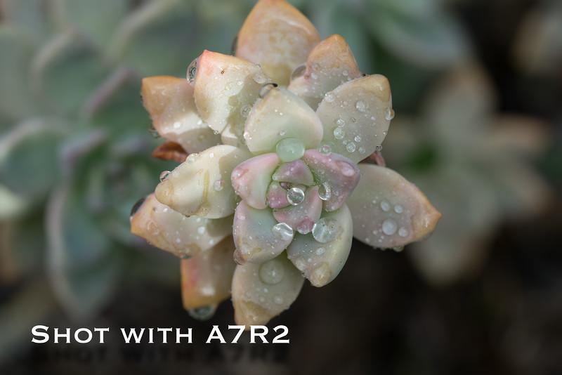 A7R2 Macro Comparison-3.jpg