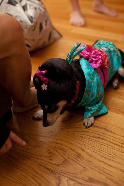Dog-sushi-halloween2-12.jpg