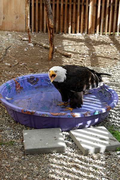 Petra is very vocal and likes to take bathes.