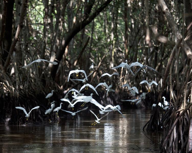 Everglades_101_IMG_1157_Everglades.jpg