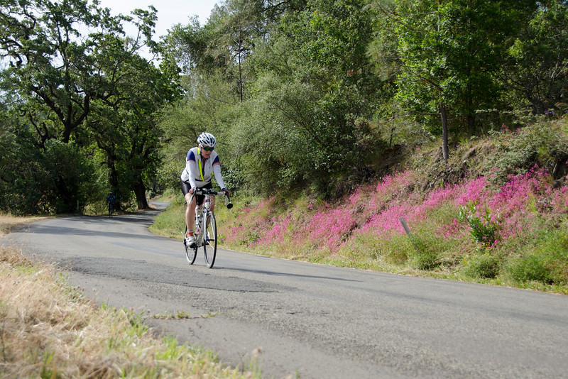 Lower Chiles Valley Road still had some wildflowers in bloom