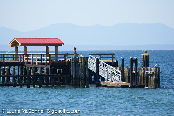 Davis Bay Pier Retrospective
