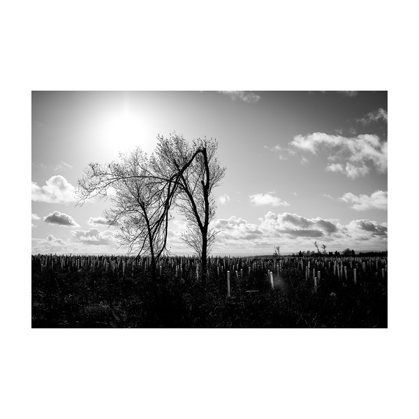 308_Trees_10x10.jpg