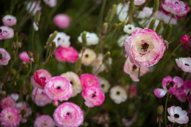 Spring Flowers B-433.jpg