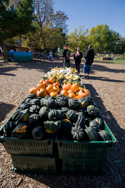 Gourds and Gangs