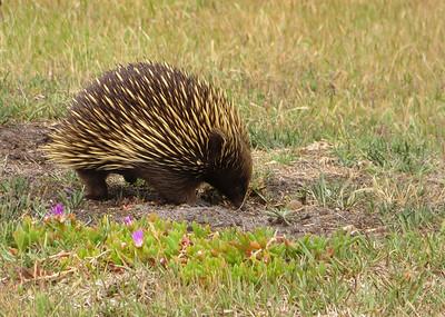 Australian Nature 2017