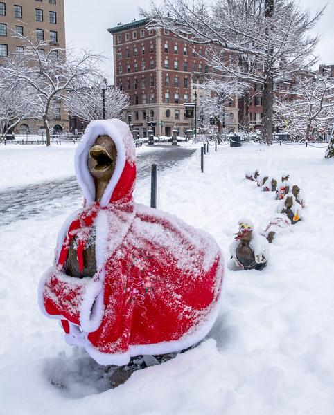 SnowyDucklings.JPG
