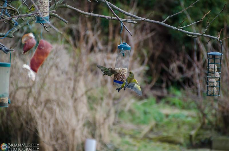 Birds 050218-3.jpg