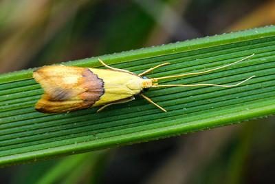 Lecithoceridae