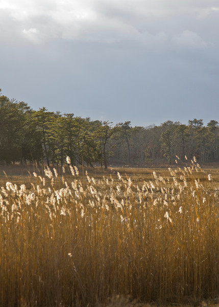 Salt Marsh, Hubbard County Park, Southampton N.Y. - 02/13/2012
