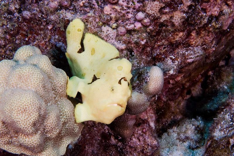 Frog Fish 1.jpg