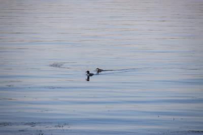 2021 Sand Lake Loons