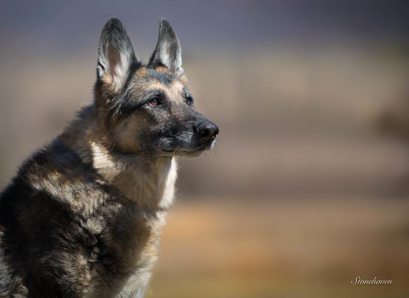 Shepherd 1.jpg