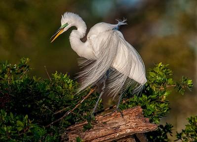 Nature/Birds  Class A