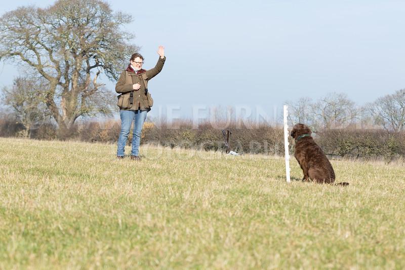 Dog Training Novice GD Feb2019-5788.jpg