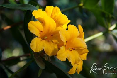 First Signs of Spring - Atlanta Botanical Gardens