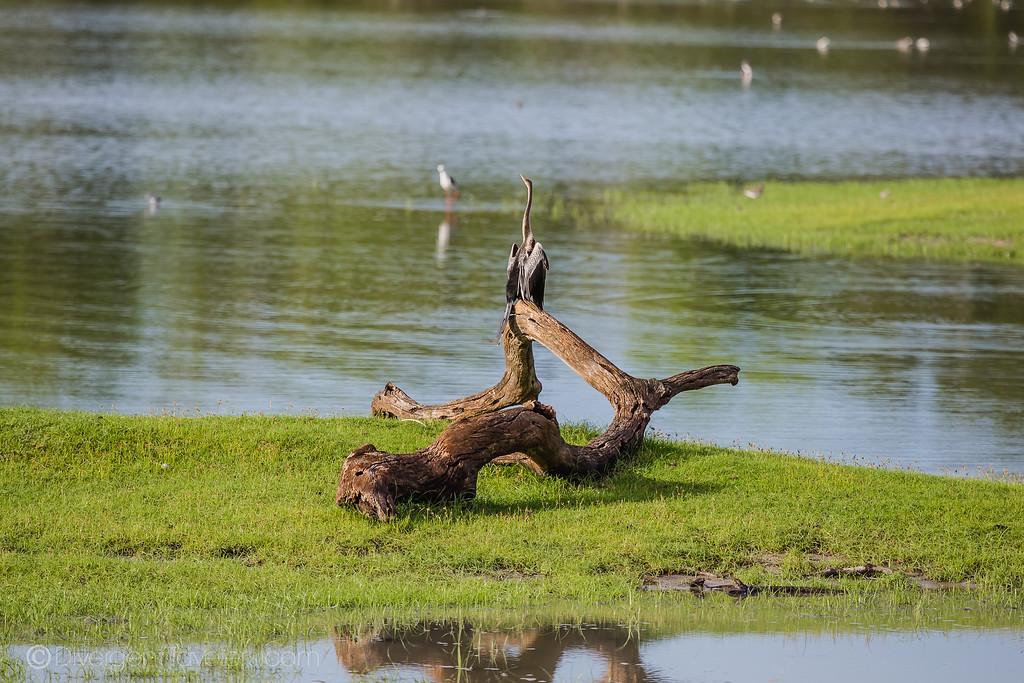 Arugam Bay Pottuvil Lagoon Sri Lanka