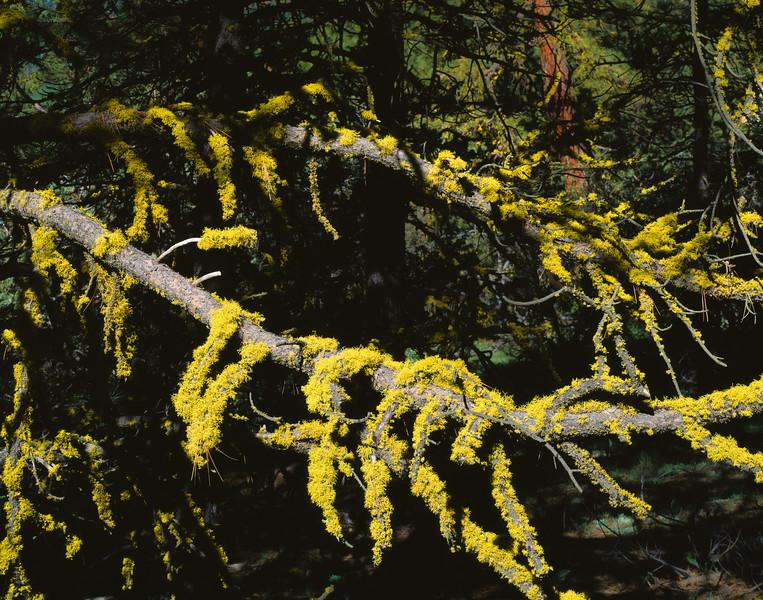Moss, Modoc County, California, 1995