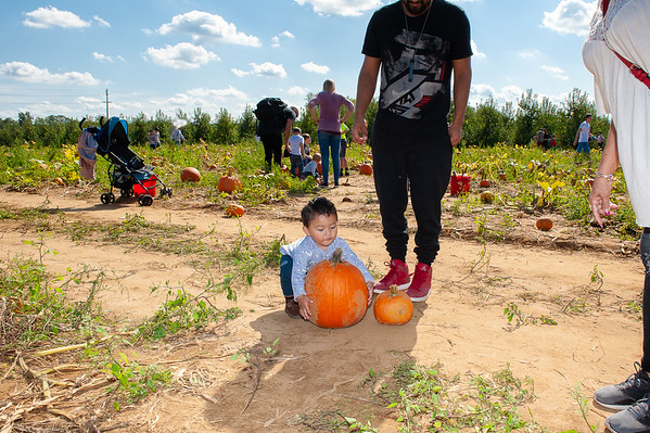 Dylan's first Pumkin Picking