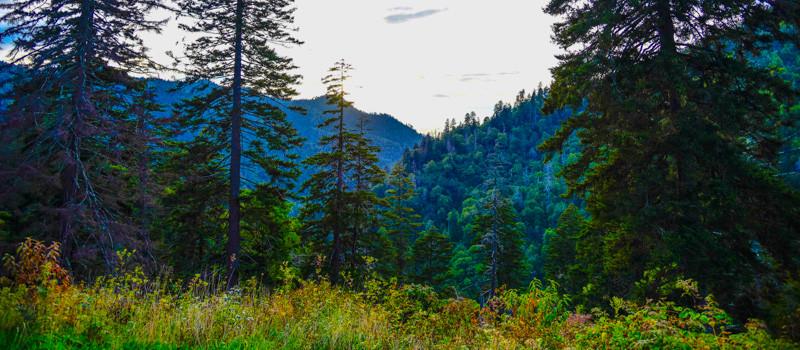Smoky Mountains 21