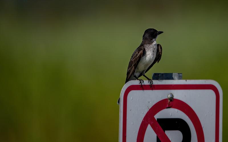 Bird-002