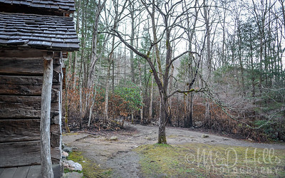 Noah Bud Ogle Nature Trail