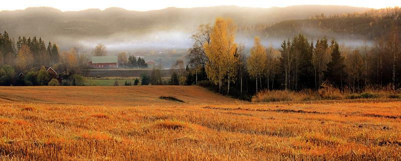 Autumn in Marka.  Forest around Oslo, Norway, 2000.