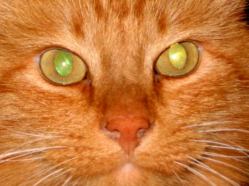 Hero kitty.