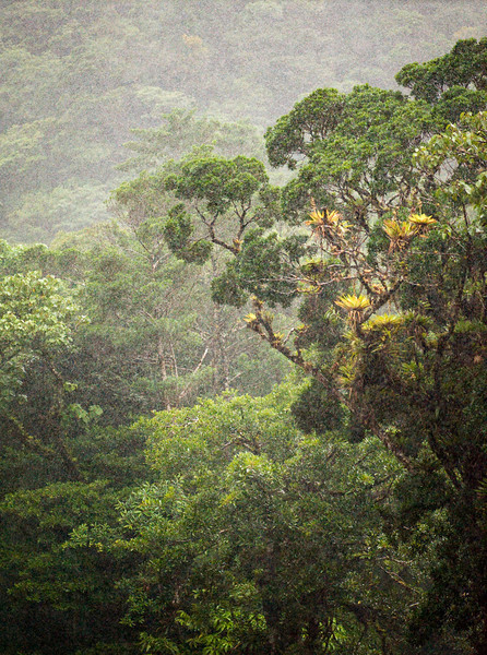 Torrential downpour, Reserva Biologica Nuboso Monteverde